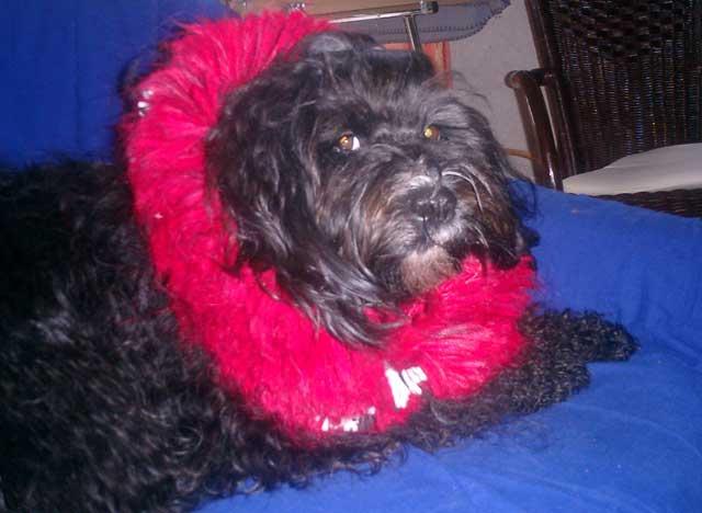 erfahrung lipom hund